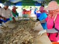 EU trở thành thị trường tôm lớn nhất của Việt Nam