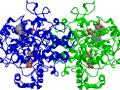 Enzymes là gì và hoạt động như thế nào ?