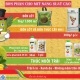Ứng dụng sản phẩm Vinhthinh Biostadt cho vườn mít khỏe, trái to đồng đều, ít xơ đen