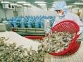 Các nhà cung cấp tôm Hoa Kỳ yêu cầu tiếp tục áp thuế nhập khẩu đối với mặt hàng tôm