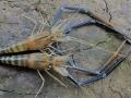 Đại sứ Israel chia sẻ bí quyết 'nuôi tôm càng xanh toàn đực, máy đếm cá dưới ao'
